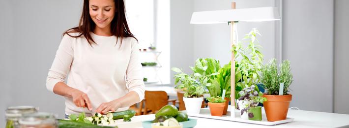 Sistemas de cultivo domestico